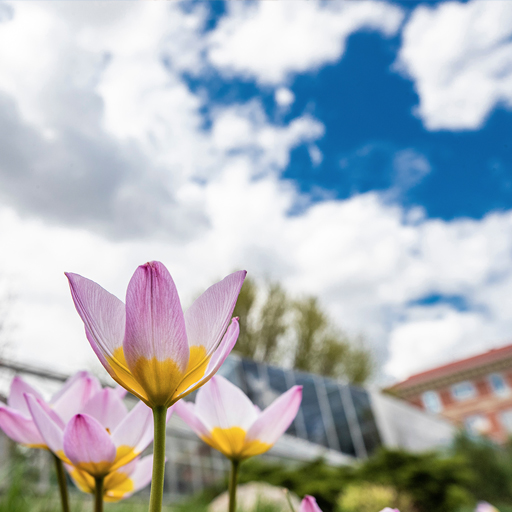 Flowers on campus